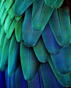 Ejemplo de colores análogos