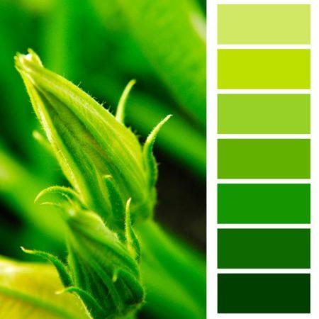 ¿Qué colores van bien con el verde?